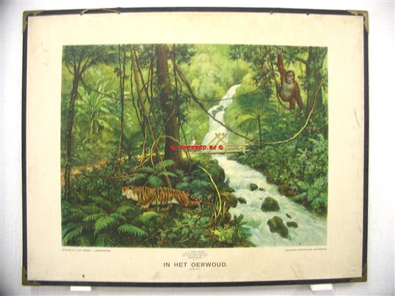 In het oerwoud.  Ykema schoolplaten., Aardrijkskundige wandkaarten Nederlandsch Indië.,  Eerste serie No: 4