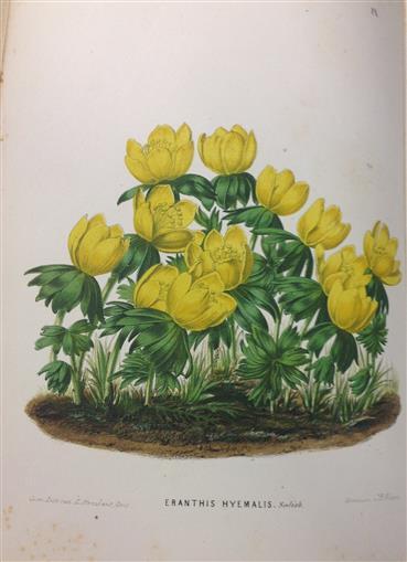 Neerland's plantentuin : afbeeldingen en beschrijvingen van sierplanten voor tuin en kamer