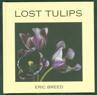 Lost tulips