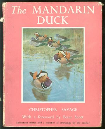 The mandarin duck.