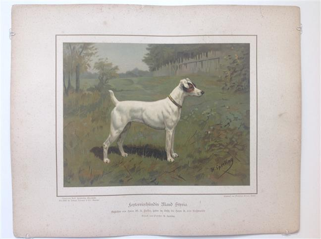 (DECORATIEVE PRENT,  LITHO - DECORATIVE PRINT, LITHOGRAPH -) Rashond - Foxterrier / Fox Terrier Dog