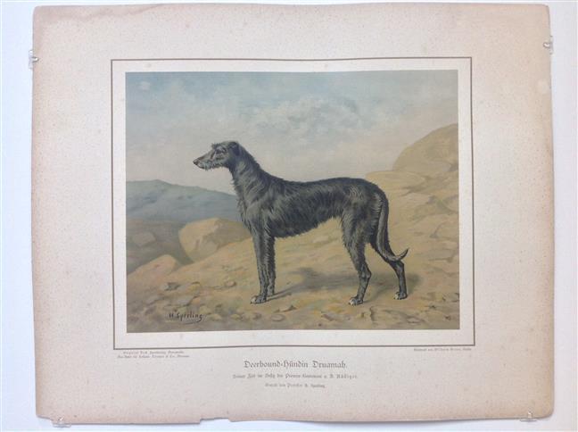 (DECORATIEVE PRENT,  LITHO - DECORATIVE PRINT, LITHOGRAPH -) Rashond - Deerhound Dog