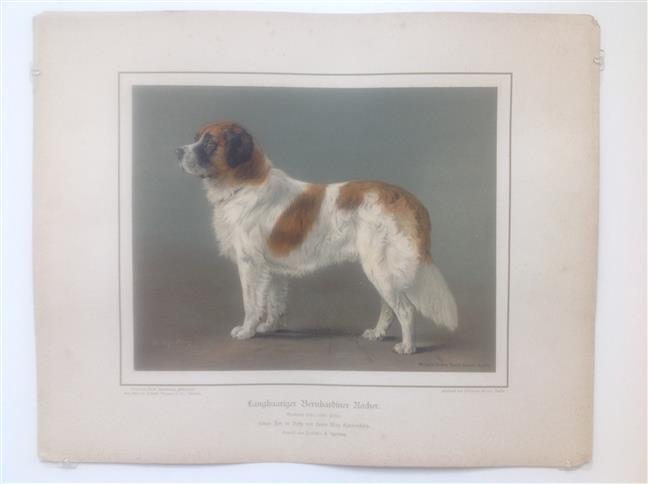 (DECORATIEVE PRENT,  LITHO - DECORATIVE PRINT, LITHOGRAPH -) Rashond - Sint-bernards hond / Bernardiner Dog