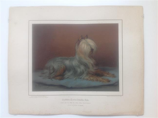 (DECORATIEVE PRENT,  LITHO - DECORATIVE PRINT, LITHOGRAPH -) Rashond - Yorkshire Terrier Dog