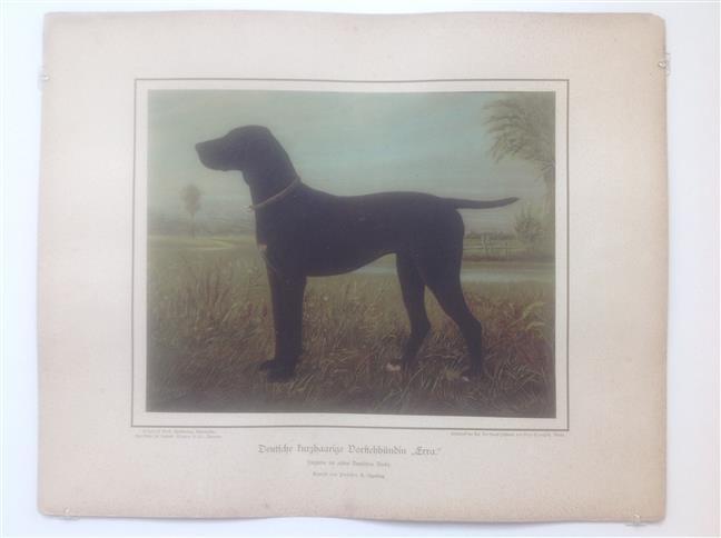 (DECORATIEVE PRENT,  LITHO - DECORATIVE PRINT, LITHOGRAPH -) Rashond - Duitse Korthaar / German Short-Haired Pointing Dog