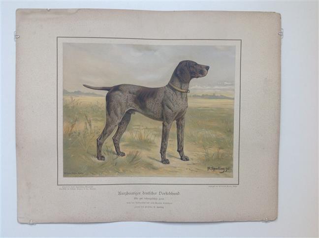(DECORATIEVE PRENT,  LITHO - DECORATIVE PRINT, LITHOGRAPH -) Rashond - Duitse staande hond korthaar /  German Short-Haired Pointing Dog Spotted