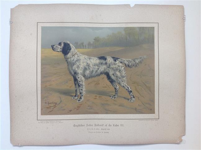 (DECORATIEVE PRENT,  LITHO - DECORATIVE PRINT, LITHOGRAPH -) Rashond -Engelse setter / English setter dog