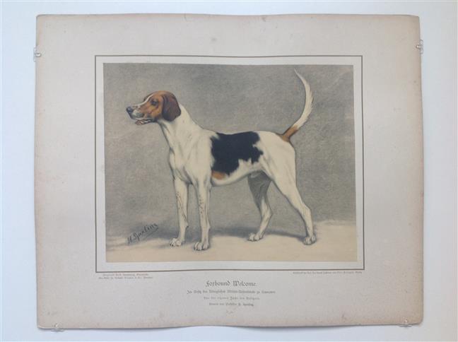 (DECORATIEVE PRENT,  LITHO - DECORATIVE PRINT, LITHOGRAPH -) Rashond -  Engelse Foxhound / Foxhound Dog