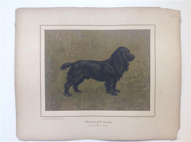 (DECORATIEVE PRENT,  LITHO - DECORATIVE PRINT, LITHOGRAPH -) Rashond -  Zwarte fieldspaniël/ Black Field Spaniel Dog