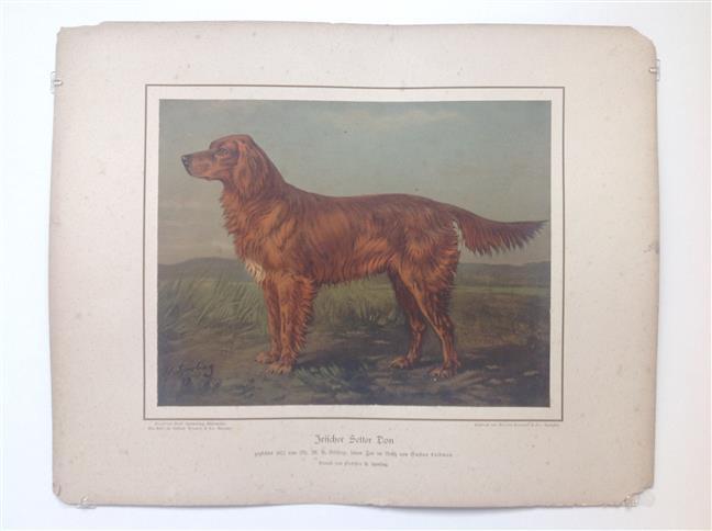 (DECORATIEVE PRENT,  LITHO - DECORATIVE PRINT, LITHOGRAPH -) Rashond - Ierse Setter / Irish Setter Dog