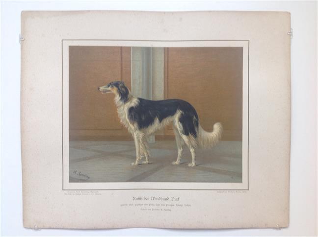 (DECORATIEVE PRENT,  LITHO - DECORATIVE PRINT, LITHOGRAPH -) Rashond - Russische Windhond - Barsoi / Russian Greyhound Dog