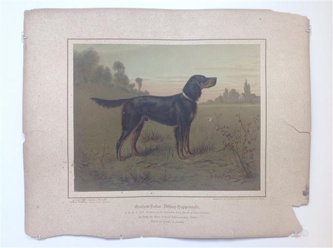 (DECORATIEVE PRENT,  LITHO - DECORATIVE PRINT, LITHOGRAPH -) Rashond - Gordon setter dog