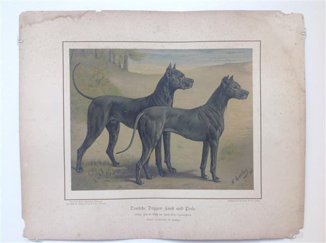 "(DECORATIEVE PRENT,  LITHO - DECORATIVE PRINT, LITHOGRAPH -) Rashond - Duitse dog - grote Deense hond ""blauw"" / Great dane blue"