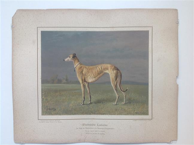 (DECORATIEVE PRENT,  LITHO - DECORATIVE PRINT, LITHOGRAPH -) Rashond - Windhond / greyhound dog