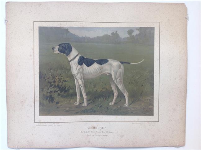 (DECORATIEVE PRENT,  LITHO - DECORATIVE PRINT, LITHOGRAPH -) Rashond - Engelse pointer  / English Pointer dog