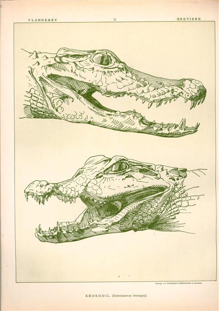 (DECORATIEVE PRENT,  LITHO - DECORATIVE PRINT, LITHOGRAPH -) # 13- Crocodile : Osteolaemus Tetraspis----  Seetiere -- Naturstudien für Kunst u. Kunstgewerbe
