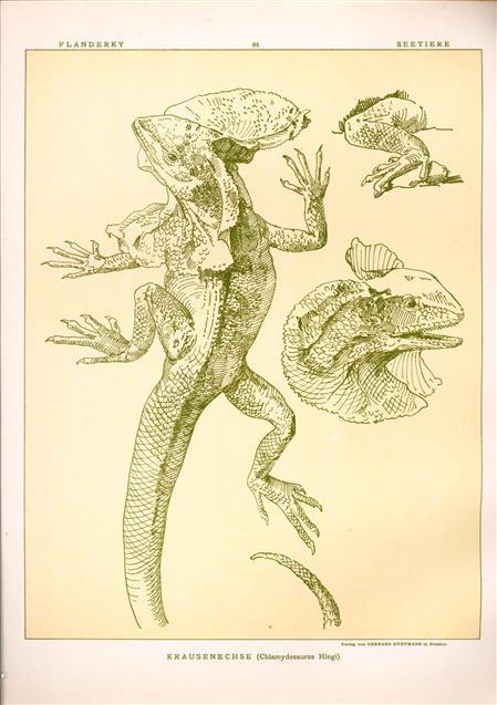 (DECORATIEVE PRENT,  LITHO - DECORATIVE PRINT, LITHOGRAPH -) # 86- Lizard - frilled lizard - Chlamydosaurus Hingi  ---  Seetiere -- Naturstudien für Kunst u. Kunstgewerbe