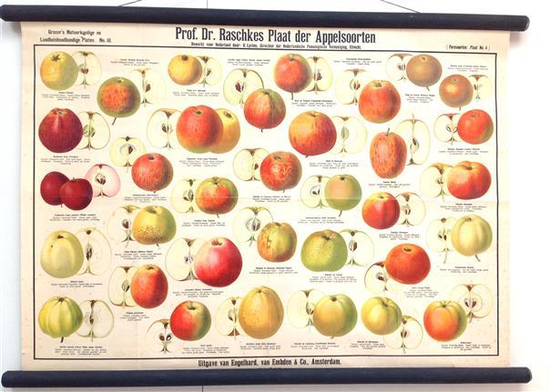 (SCHOOLPLAAT - SCHOOL POSTER / MAP - LEHRTAFEL) Grasers natuur en landhuishoudkundige platen nr III ( 3 ) Prof. Dr. Raschkes plaat der Appelsoorten. Bewerkt voor Nederland door R Lysten .....