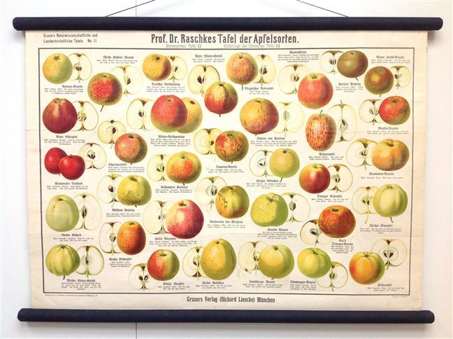 (SCHOOLPLAAT - SCHOOL POSTER / MAP - LEHRTAFEL) Prof Dr Raschkes Tafel der Apfelsorten ---  Grasers Naturwissenschaftliche und Landwirtschaftliche Tafeln No 11 ---